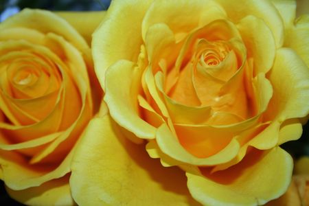 Close-up of a Yellow roses bouquet