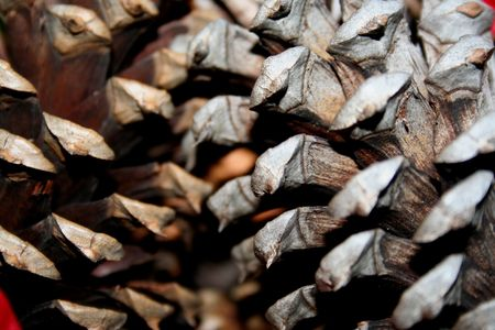 Close-up of a pine cone Stock Photo - 3948264