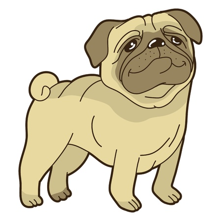 pug puppy: Vector funny cartoon pug - on white background