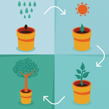 sprout growth: Vector growth concept - infographic in flat style Illustration