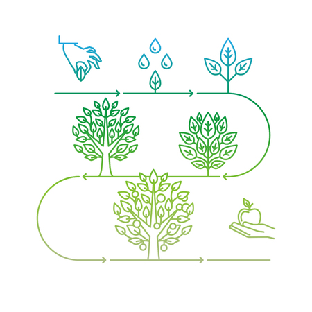 seed growing: infographics design elements and icons in linear style - business development and growth concepts - growing plant from seed to tree and apple fruit Illustration