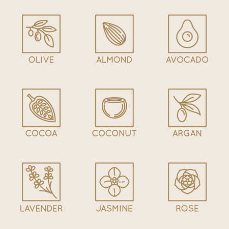A Vector set of natural ingredients and oils isolated on plain background. Illustration