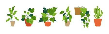 Vector set of illustrations in simple flat style - decorative green houseplants in pots and planters, natural home decor and urban jungle