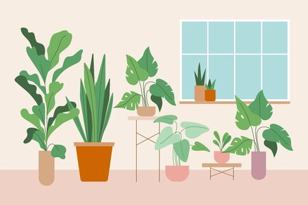 Vector illustration in flat trendy style - simple minimal interior with green decorative houseplants in pots and planters - urban jungle illustration