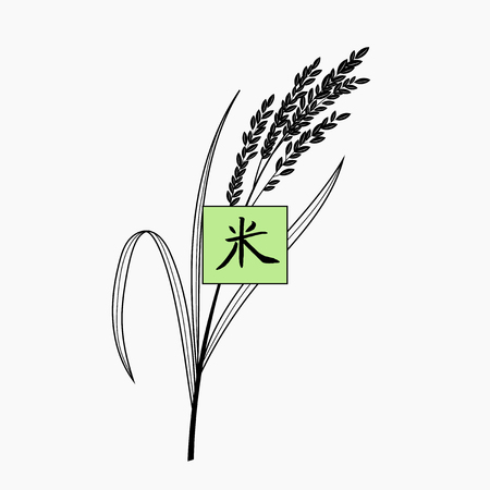 Rice plant with hand written chinese character. Isolated on background. Sign. Vector illustration.
