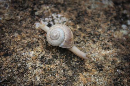 Snail on rocky photo