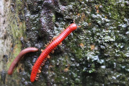 millipede couples photo
