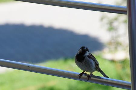 Bird on the balcony railing. Stock Photo