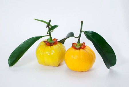 laxative: Garcinia are fruits and herbs, It�s ingredients for cooking and  for healthy supplement. It�s can help to laxative that affect from constipation