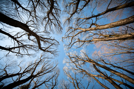 view of the trees below. autumn trees against the blue sky