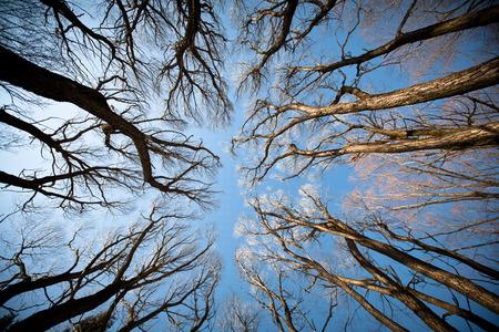 Gezien de onderstaande bomen. herfst bomen tegen de blauwe hemel Stockfoto - 27981860