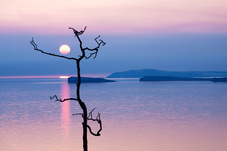 Crooked tree and small island on sunrise background. Beautiful sky at sunrise photo