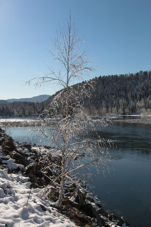 Alone tree on the bank of a mountain river photo