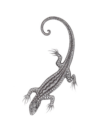 pointillism: The drawn lizard on a white background in the style of pointillism  Isolated
