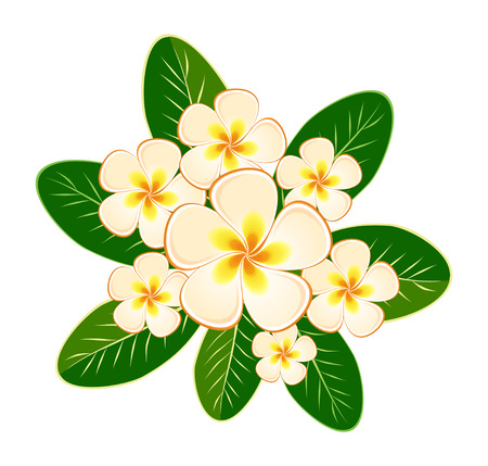 Card design, invitation with flowers frangipani (plumeria) on a light green background