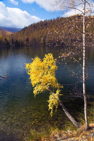 Herfst, berk met gele bladeren over een meer op een achtergrond van blauwe hemel Stockfoto - 39559877
