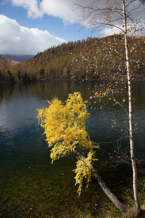 Autumn, birch with yellow leaves over a lake on a background of blue sky Stockfoto