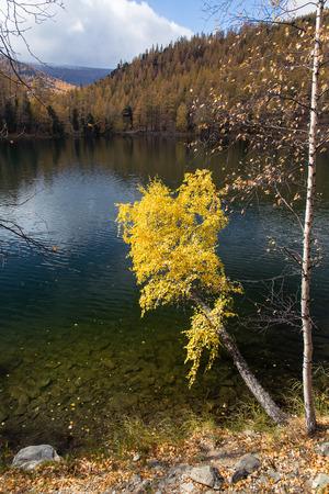 Herfst, berk met gele bladeren over een meer op een achtergrond van blauwe hemel Stockfoto - 39559882