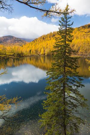 Autumn, sparren over het meer op een achtergrond van gele bos en blauwe hemel