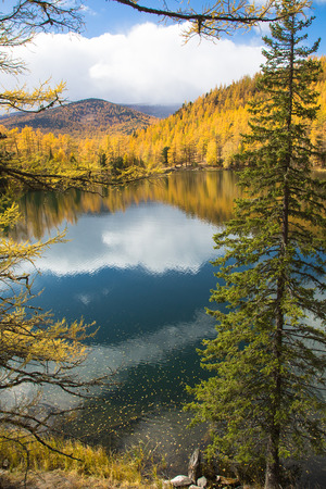 Autumn, spruce over the lake on a background of yellow forest and blue sky