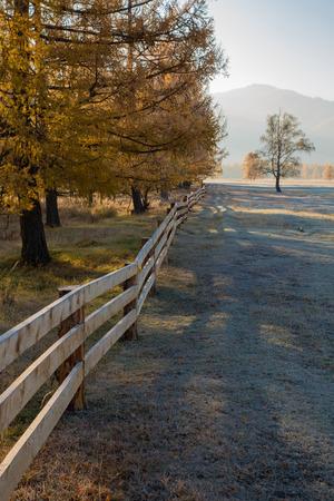 Herfst, geel larchs en houten omheining op de achtergrond heuvels en de blauwe hemel Stockfoto - 39559909