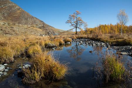 Kreek van de herfst met stenen, een eenzame boom op een achtergrond van gele bos, blauwe hemel en bergen Stockfoto - 39559915
