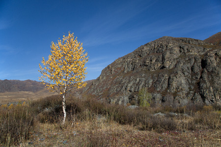 Autumn, lonely birch with yellow leaves on the background cliffs and blue sky