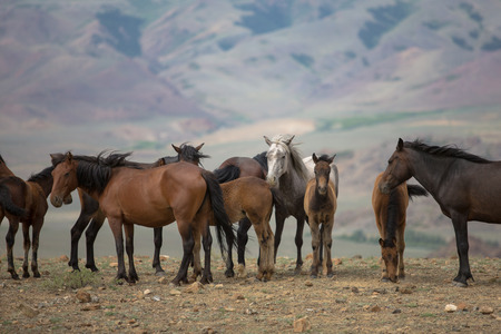 herd of horses grazing in a meadow on a background of mountains