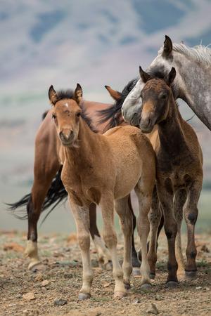 kudde paarden grazen in een weide met jonge veulens