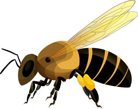 Bee Reklamní fotografie - 32675130