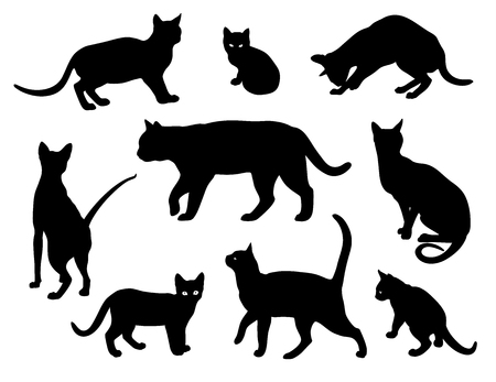 Insieme della siluetta di vettore del gatto isolato su priorità bassa bianca, gatti in diverse pose