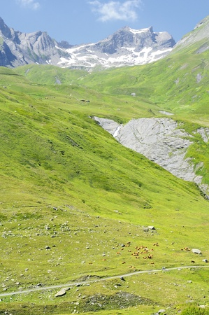 Pastures of the French Alps
