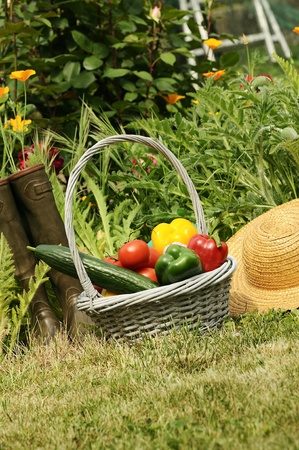basket of vegetables and in a botanical garden photo