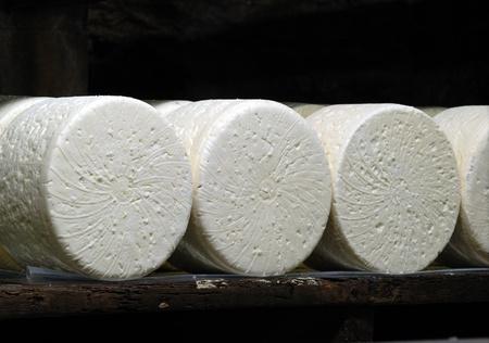 penicillium: roquefort cheese in refining