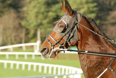 blinders: Horse Racing after the race