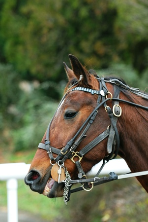 bridle: Horse Racing