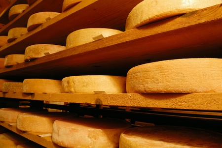 milk production: Vacherin Fribourgeois cheese in a cellar, Switzerland