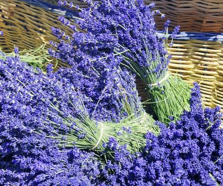 Basket of lavender  photo