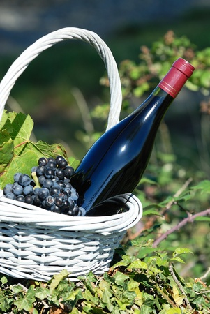 vegetal: Bottle of red wine and grapes in basket