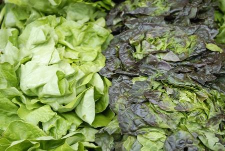 escarole: duo of salads