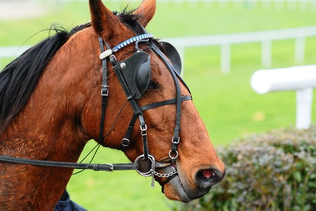 blinders: Horse Racing after the race,equestrian sport
