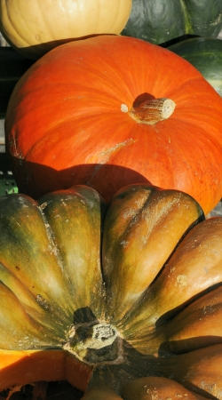 Assorted pumpkins with autumn leaves photo