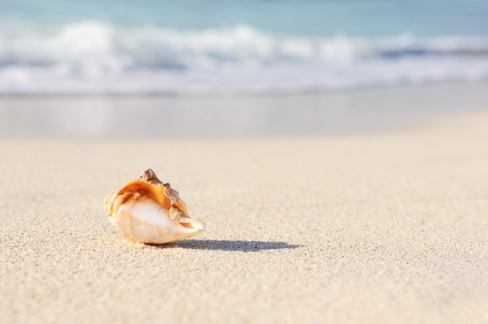 sea shells: sea shells with sand as background