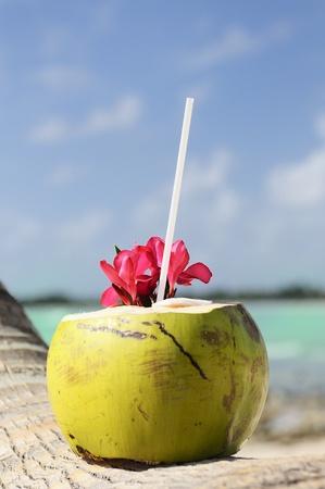 drinking straw: Cocco con cannuccia su una palma al mare