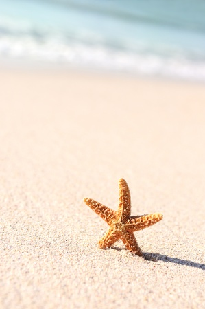 Summer vacations - starfish on sunset sea sand beach Stock Photo - 11878147
