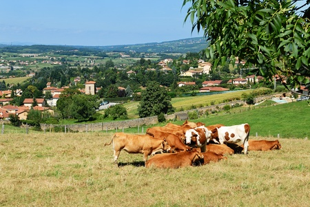 Picture of a village in the French region of Beaujolais, famous for its wines photo