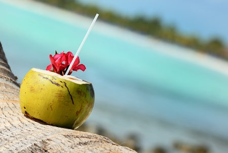 coco palm: Coconut with drinking straw on a palm tree at the sea