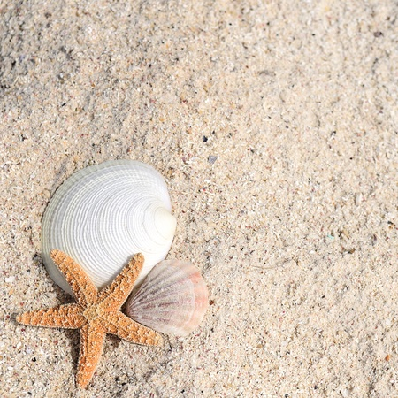 seashell: closeup of beach with starfish and shells like summer vacation background
