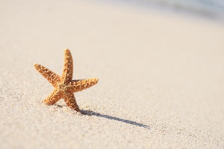 a serene life: Summer vacations - starfish on sunset sea sand beach  Stock Photo