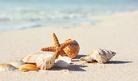riviera maya: sea shells with sand as background